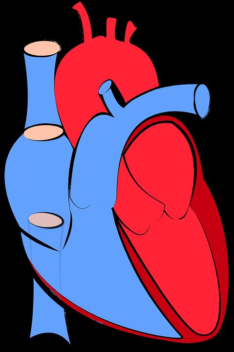 Heart Block Remedies