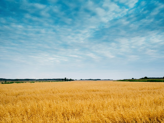 Barley Water Weight Loss Tips