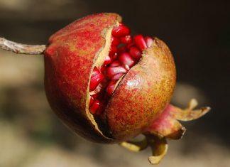 Kidney Stone Natural Remedies